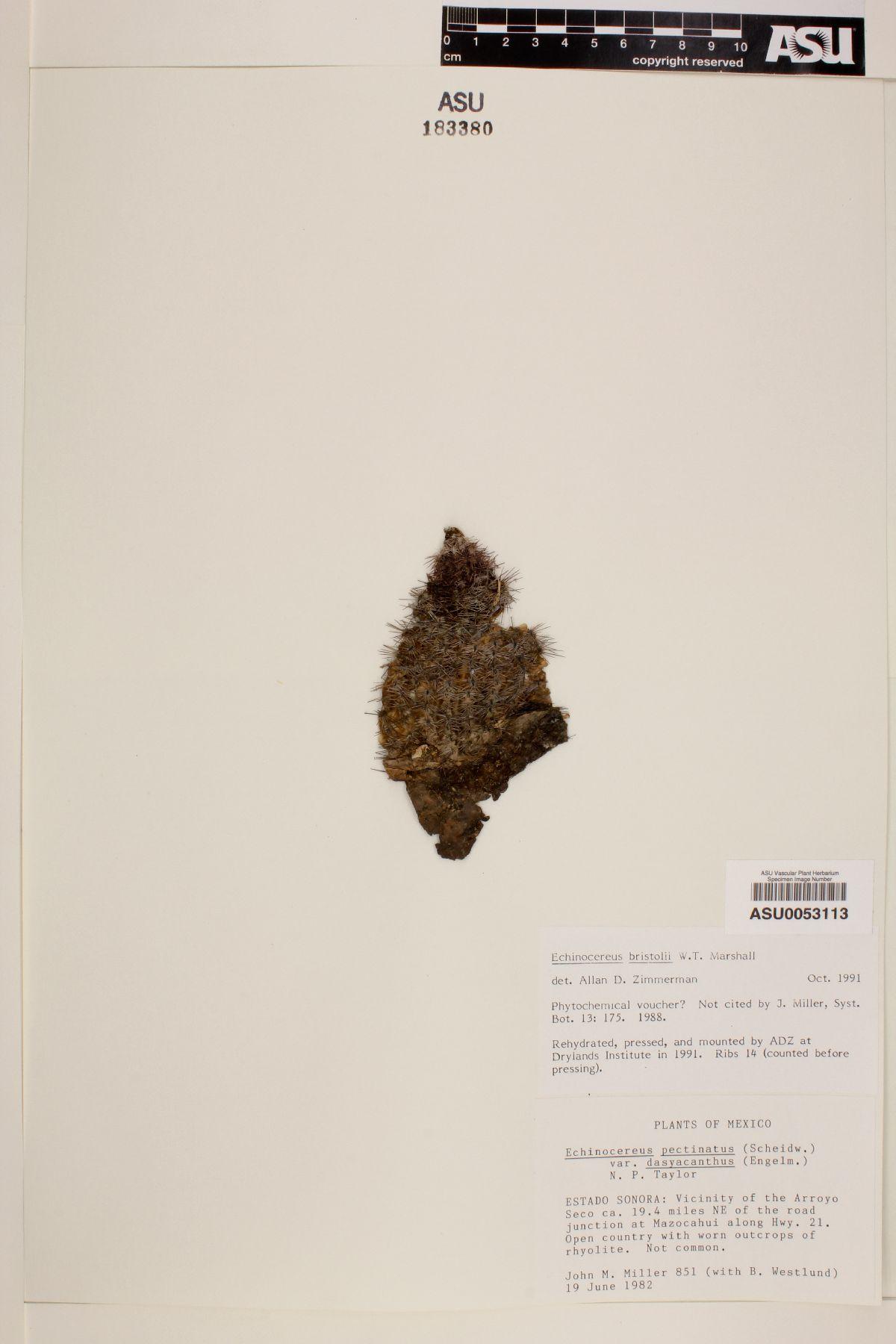 Echinocereus bristolii image