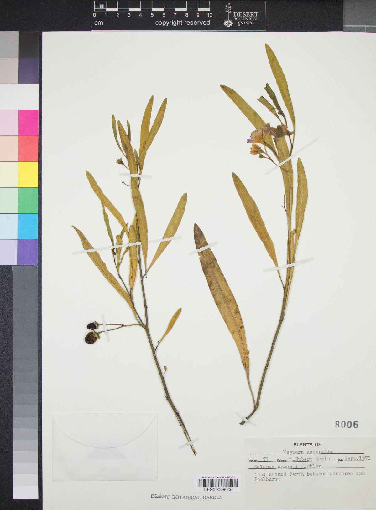 Solanum symonii image