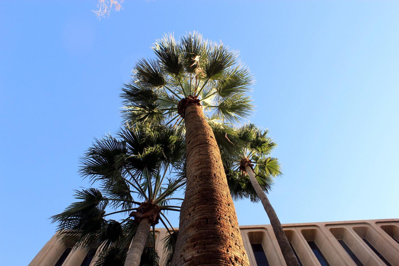 Arecaceae image