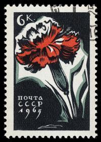 Image of Dianthus caryophyllus