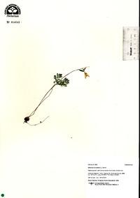 Image of Dicentra cucullaria