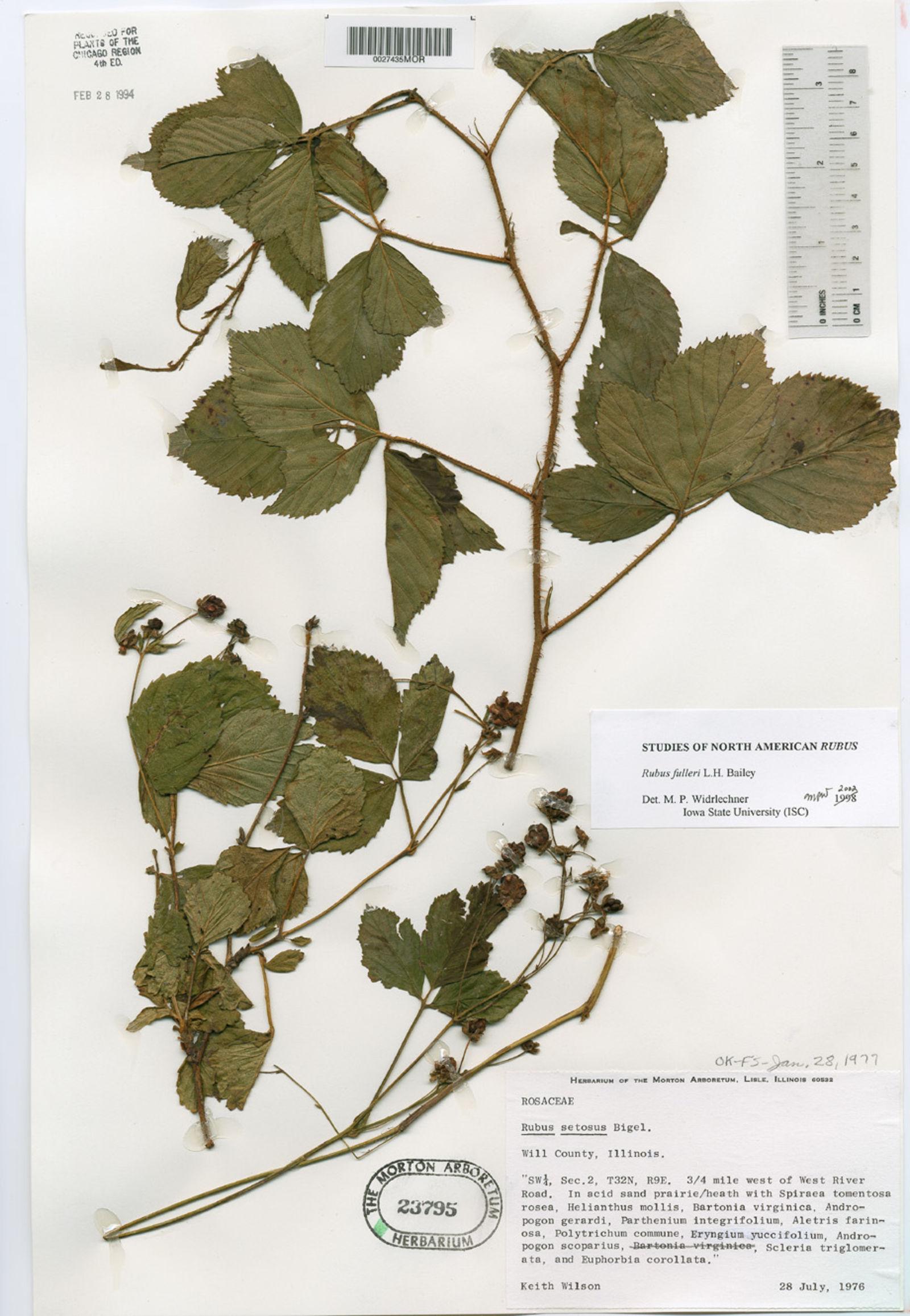 Rubus plus image