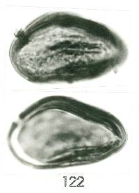 Image of Philodendron panamense
