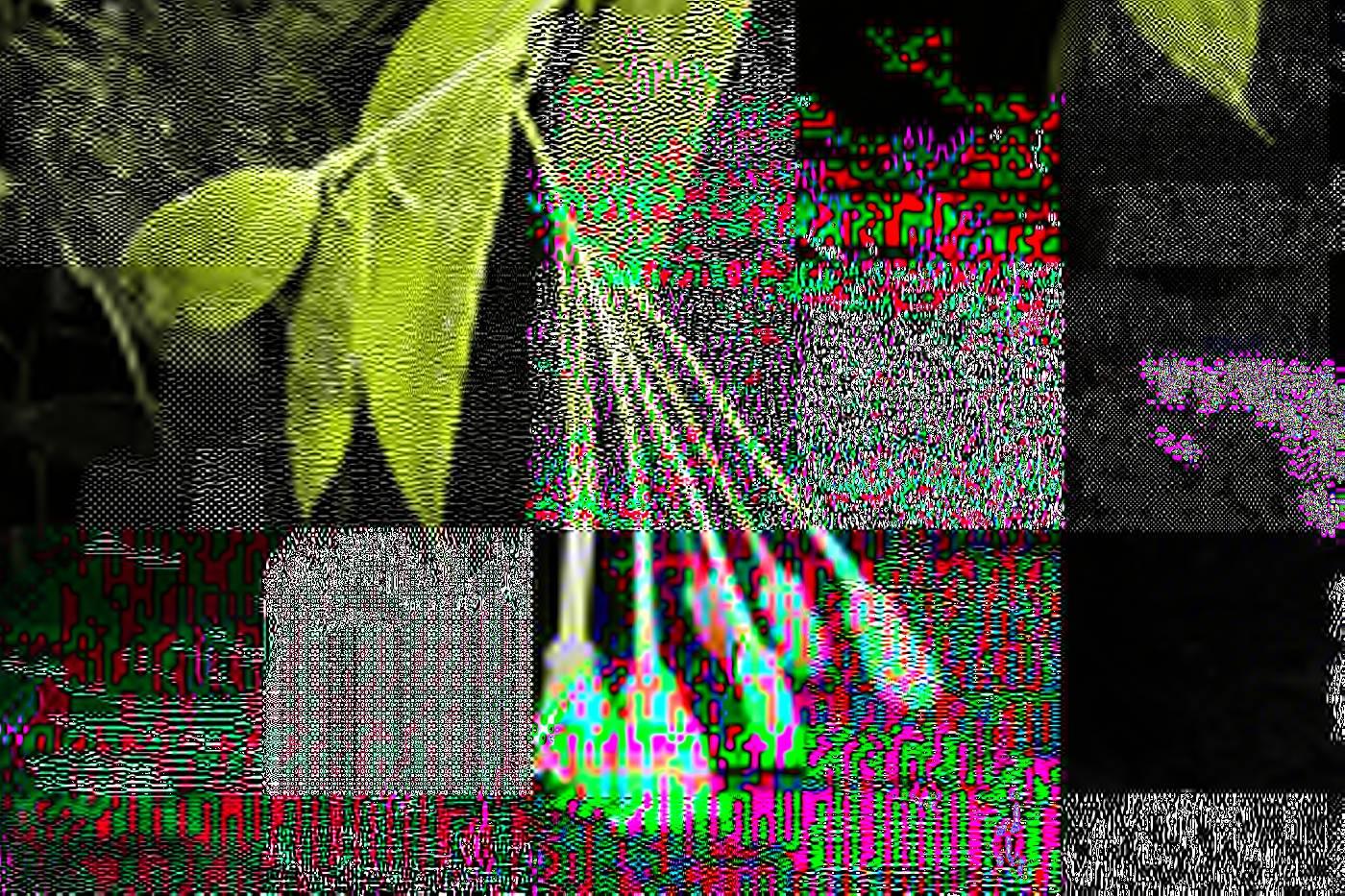 Didonica panamensis image