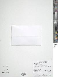 Didymoglossum curtii image