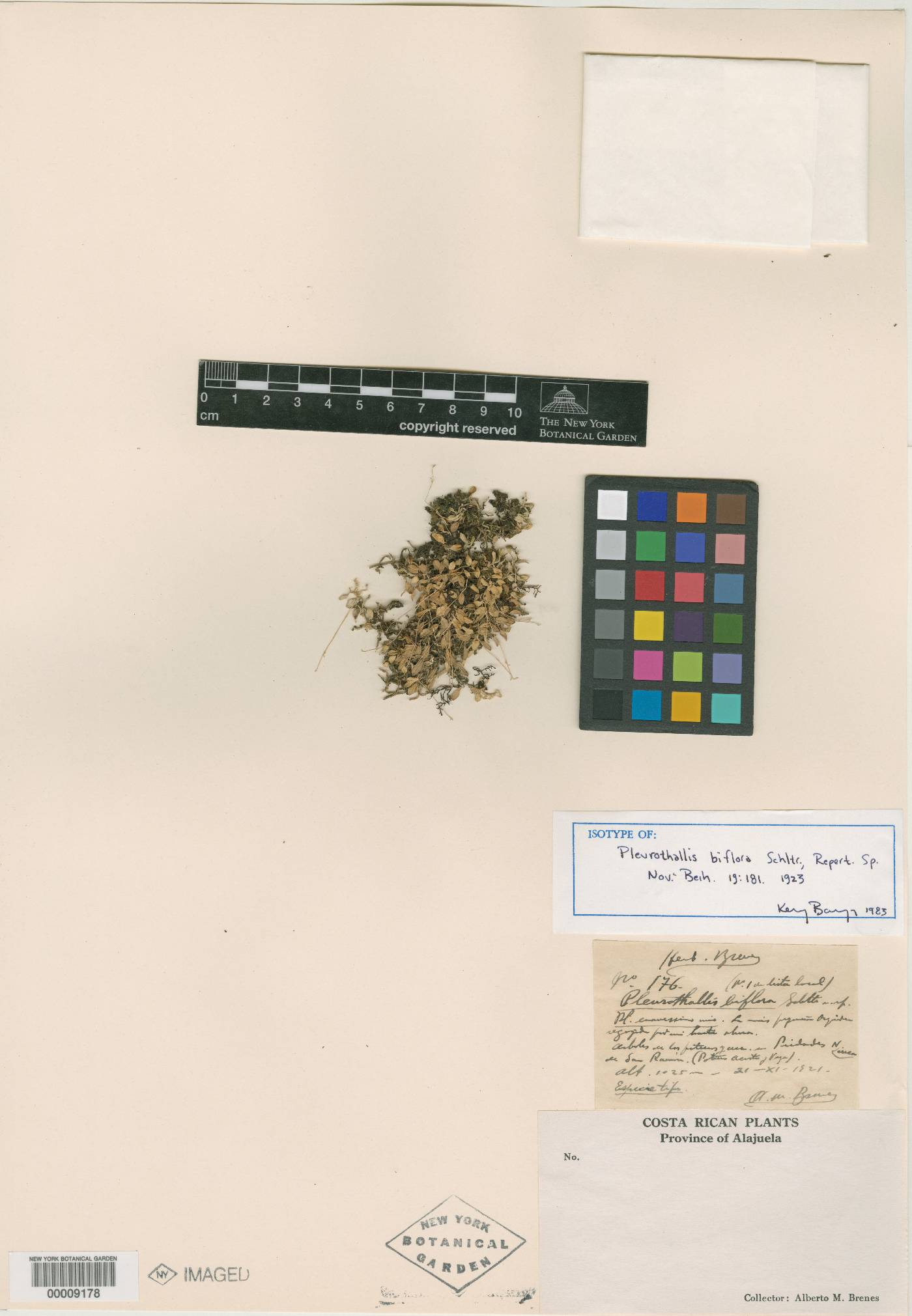 Trichosalpinx orbicularis image