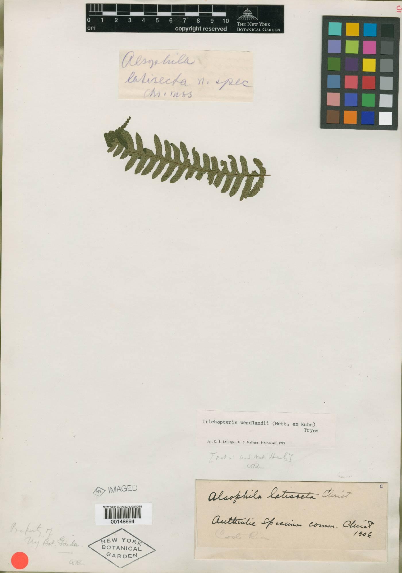 Cyathea wendlandii image