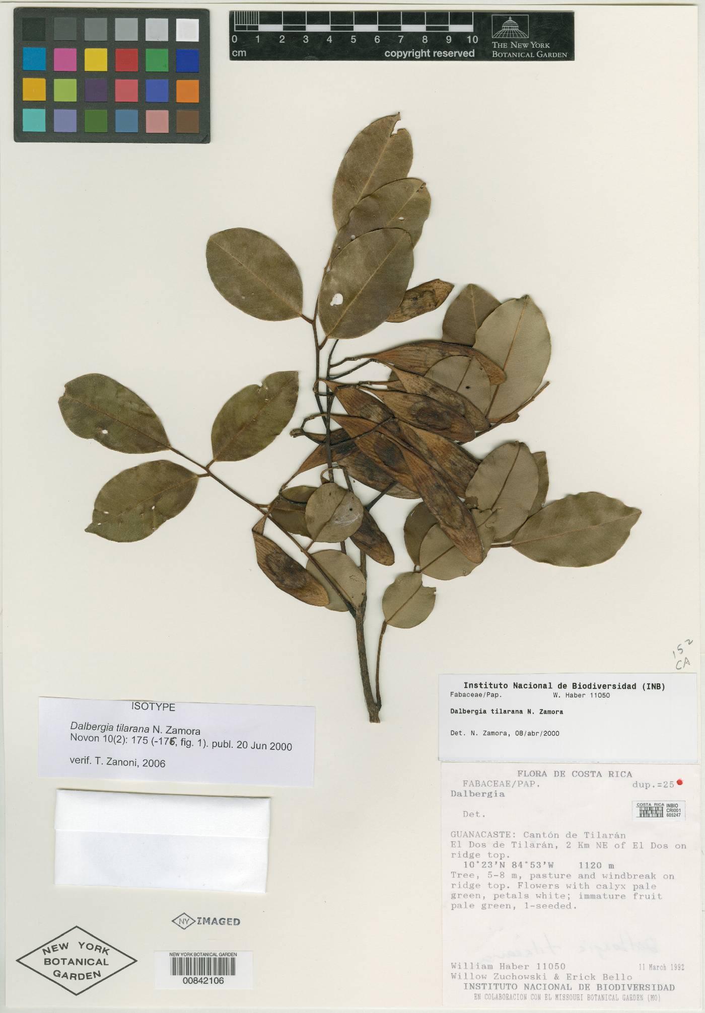 Dalbergia tilarana image