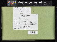 Bactris coloniata image