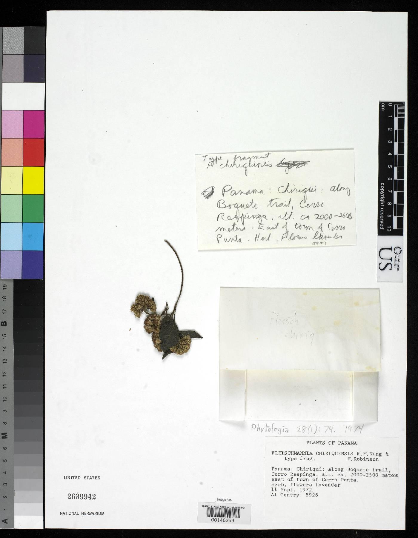 Fleischmannia chiriquensis image
