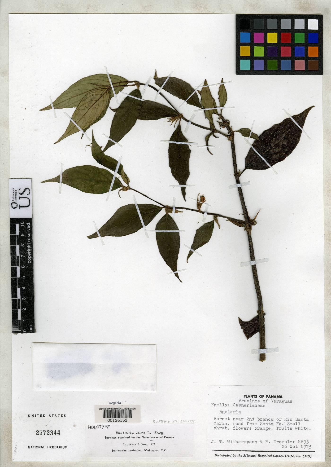 Besleria rara image