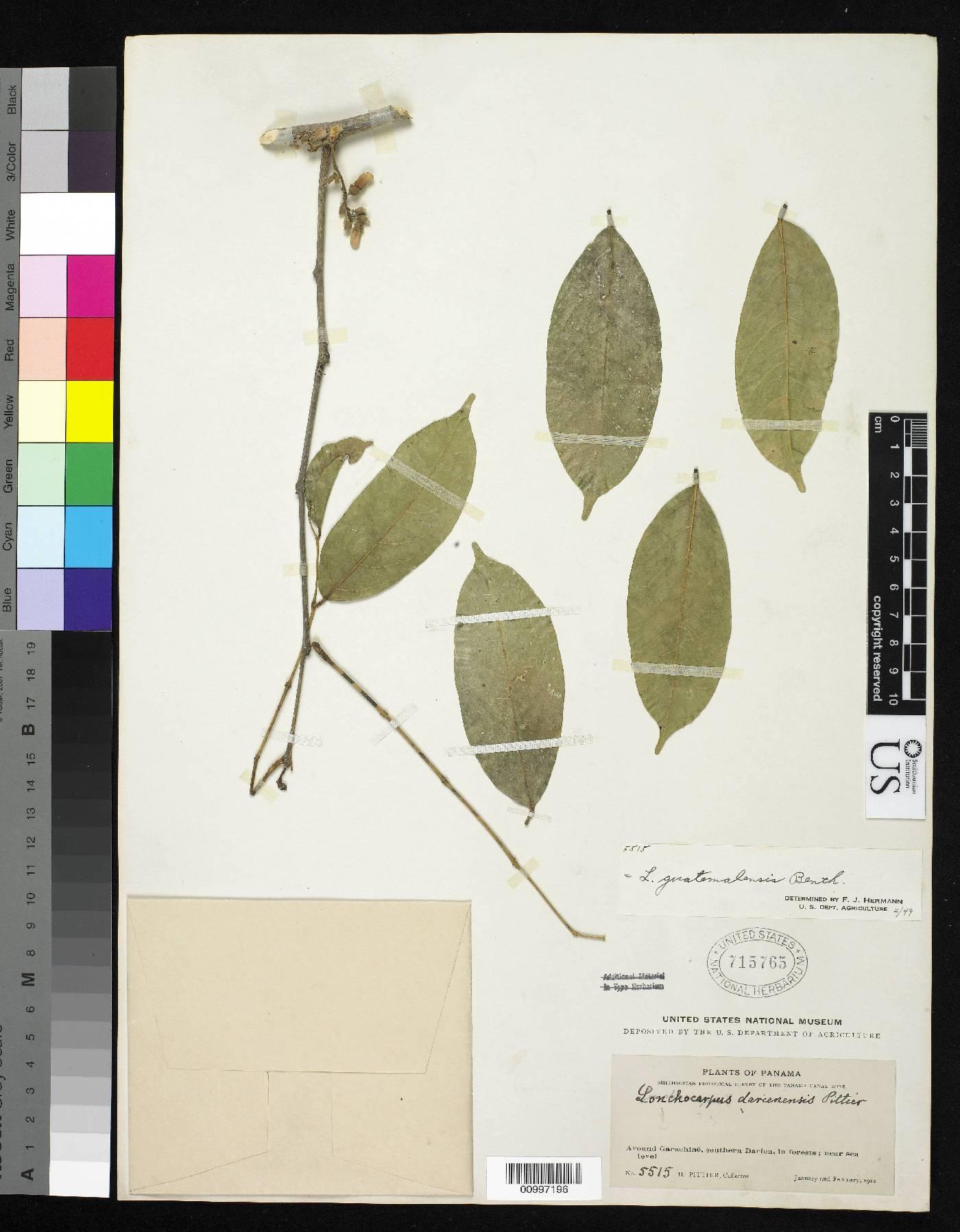 Lonchocarpus guatemalensis image